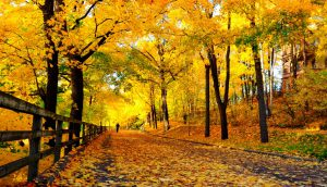 Best time to visit Iran - Fall in Iran